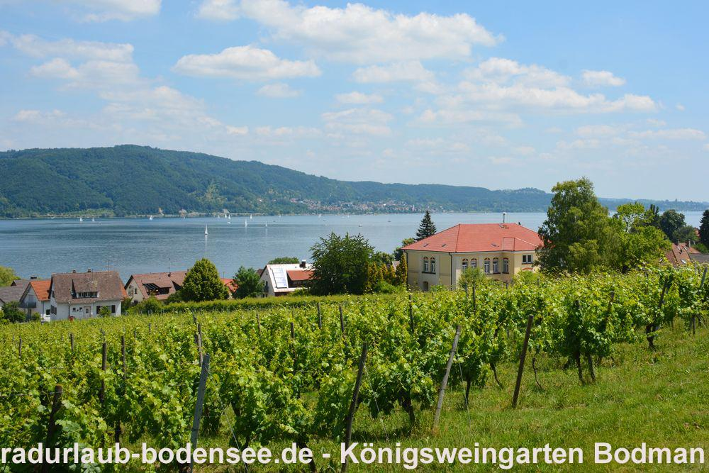Cycling Lake Constance - Wine and wine-makers on Lake Constance